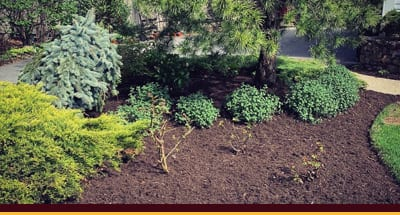 Landscape Construction & Maintenance
