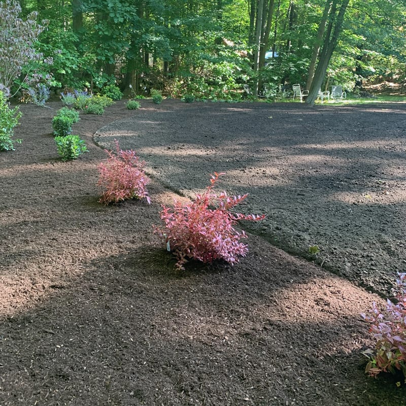 Professional landscape planting and mulching in MA